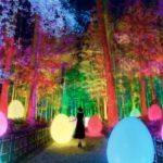 【2021年 水戸 イベント】大人気のチームラボ 偕楽園 光の祭 開催!2021年2月13日〜☆